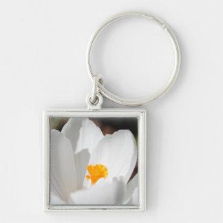 flor branca do açafrão chaveiro