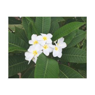 Flor branca pequena nas folhas verdes