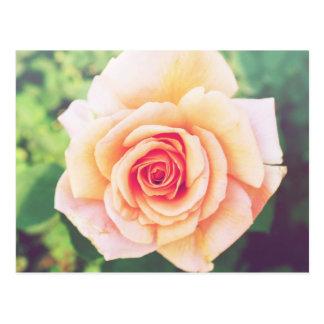 Flor cor-de-rosa da laranja bonita cartão postal