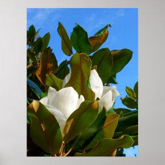 Flor da magnólia pôsteres