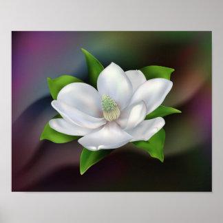 Flor da magnólia posteres