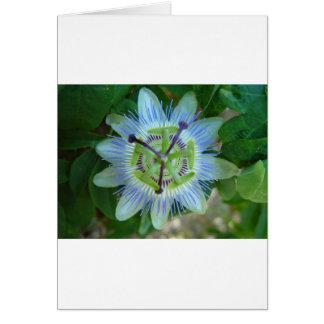 Flor da paixão cartão comemorativo