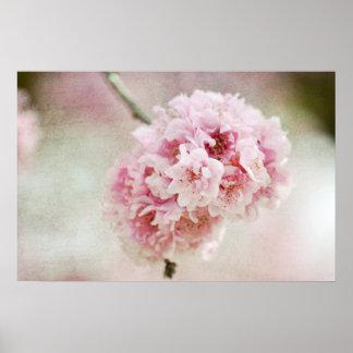 Flor de cerejeira botânica pôster