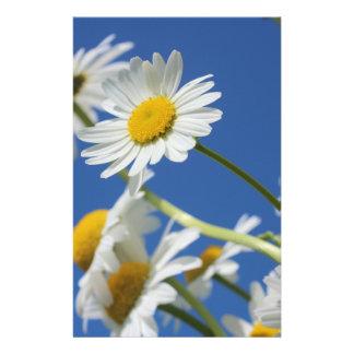 Flor de Dasy Panfletos
