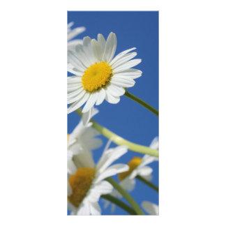 Flor de Dasy 10.16 X 22.86cm Panfleto