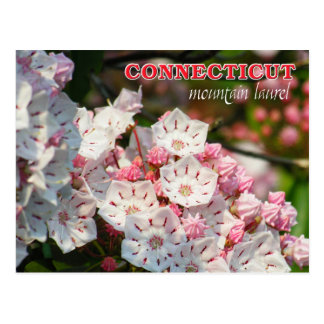 Flor de estado de Connecticut: Louro de montanha Cartão Postal