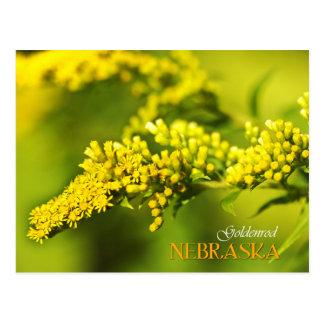 Flor de estado de Nebraska: Goldenrod Cartão Postal