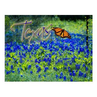 Flor de estado de Texas - Bluebonnets Cartão Postal