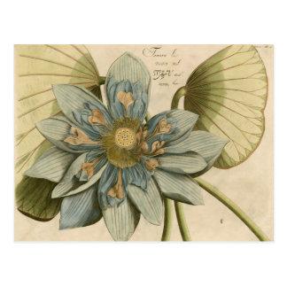 Flor de Lotus azul no fundo de Tan com escrita Cartão Postal