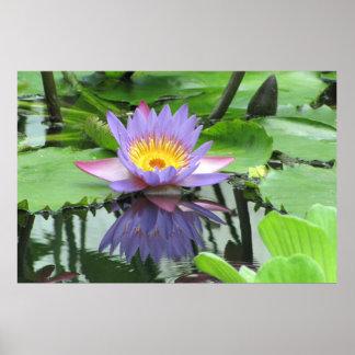 Flor de Lotus Pôsteres