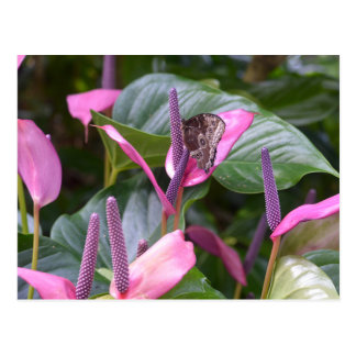 Flor do antúrio com cartão da borboleta