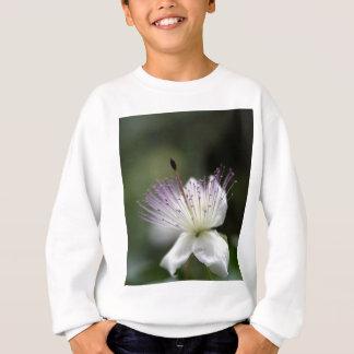 Flor do arbusto da alcaparra, Capparis spinos. Agasalho