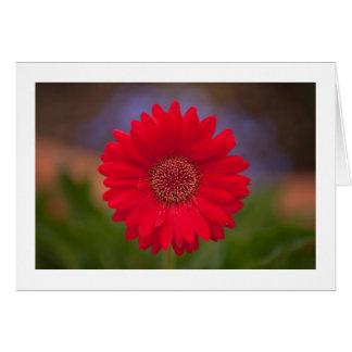 Flor do centro comercial cartão comemorativo