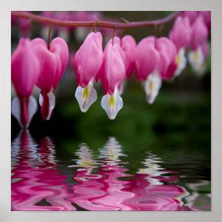 flor do coração de sangramento poster