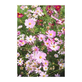 Flor do cosmos (Bidens Formosa). Kirkwood Impressão De Canvas Envolvidas