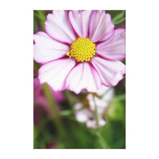 Flor do cosmos (bidens formosa) impressão em tela