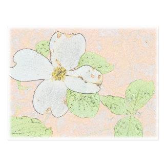 Flor do Dogwood Cartão Postal