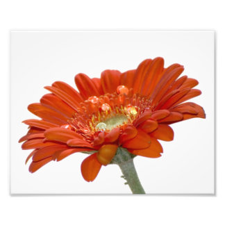 Flor do Gerbera da margarida alaranjada Fotografia