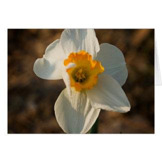 Flor do jardim cartão de nota