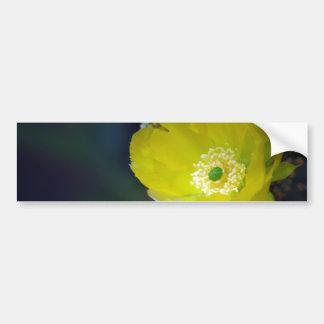 Flor e significado do cacto adesivo para carro