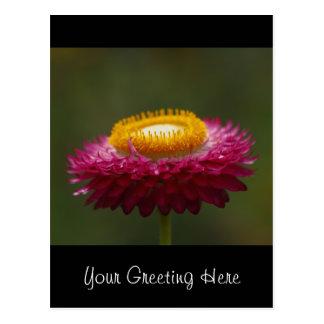 Flor eterna vermelha cartão postal