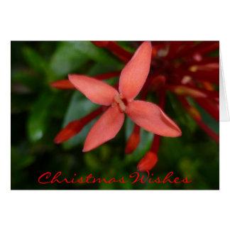 Flor festiva de Ixora do Natal Cartão Comemorativo