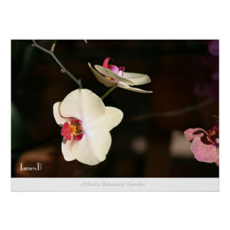 Flor - jardim botânico de Atlanta Poster