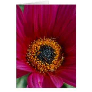 Flor magenta cartão