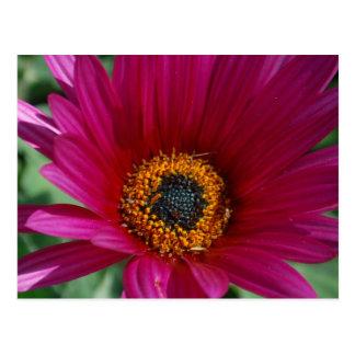 Flor magenta cartão postal