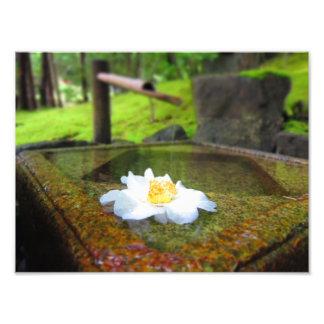 Flor na água artes de fotos