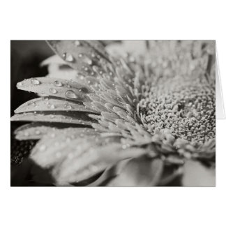 Flor preta & branca & cartão de nota das gotas