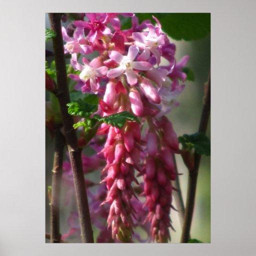 Flor selvagem atual cor-de-rosa posters