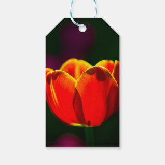 Flor vermelha da tulipa
