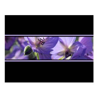 Floral Purple Black And White Postcard