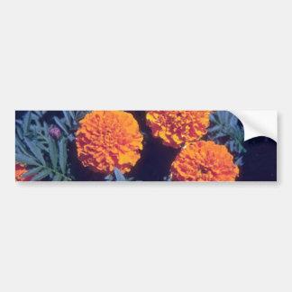 Flores alaranjadas do cravo-de-defunto francês (Ta Adesivo