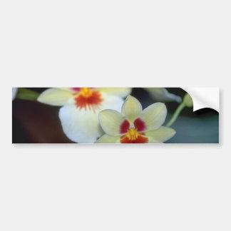 Flores amarelas de Miltoniopsis Adesivo