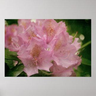 Flores bonito cor-de-rosa florais & das hortaliças pôster