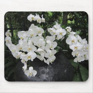 Flores brancas do prefection puro, mouse pads