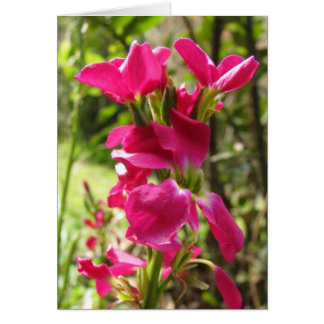 Flores conservadas em estoque vermelhas cartão