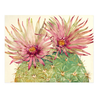 Flores cor-de-rosa do cacto cartão postal