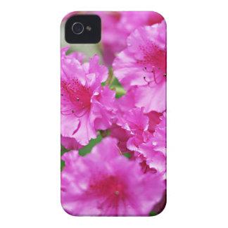 Flores cor-de-rosa do rododendro do primavera capinhas iPhone 4