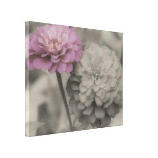 Flores cor-de-rosa do Zinnia em preto e branco Impressão Em Tela