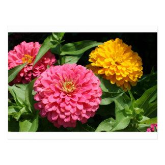 Flores cor-de-rosa e amarelas - cartão postal