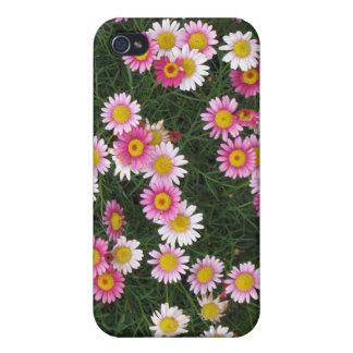 Flores cor-de-rosa femininos da margarida iPhone 4 capa