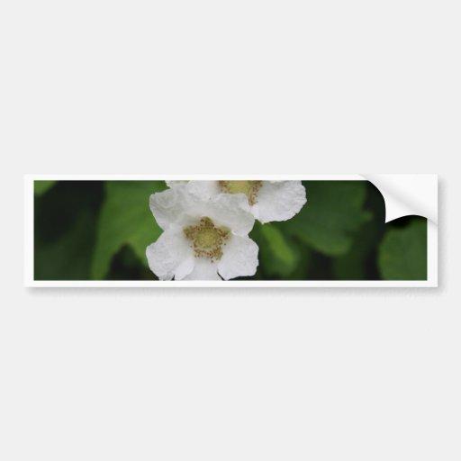 Flores da baga adesivo