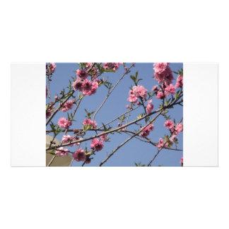 Flores da cereja cartão com fotos