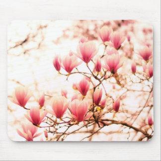 Flores de cerejeira bonitas - Central Park Mousepads