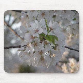 Flores de cerejeira Mousepad