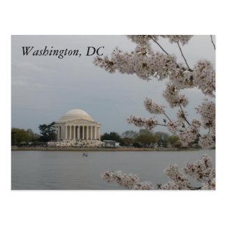 Flores de cerejeira: Washington, C.C. Cartão