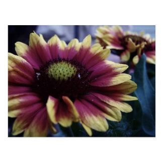 Flores desvanecidas cartão postal